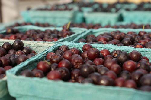 2011 08 06 Farmers Market
